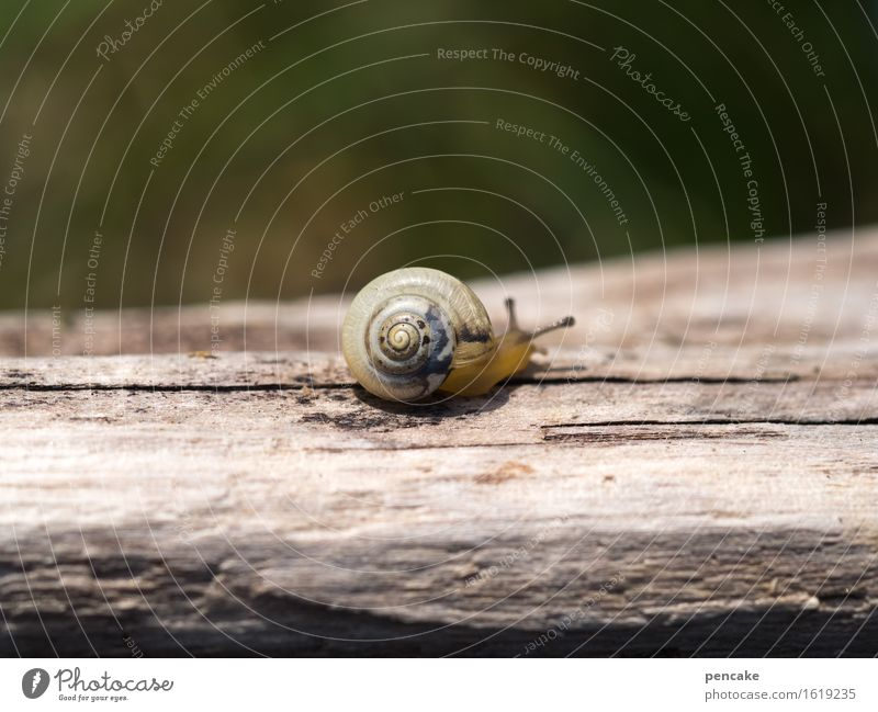 the time-travelling Nature Animal Snail 1 Wood Sign Movement Discover Warm-heartedness Attentive Serene Calm Scrap lumber Driftwood Blur Small Baby animal