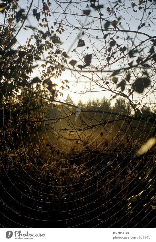Nature Sun Summer Death Warmth Moody Fog Europe Wild animal Virgin forest Wilderness Occur