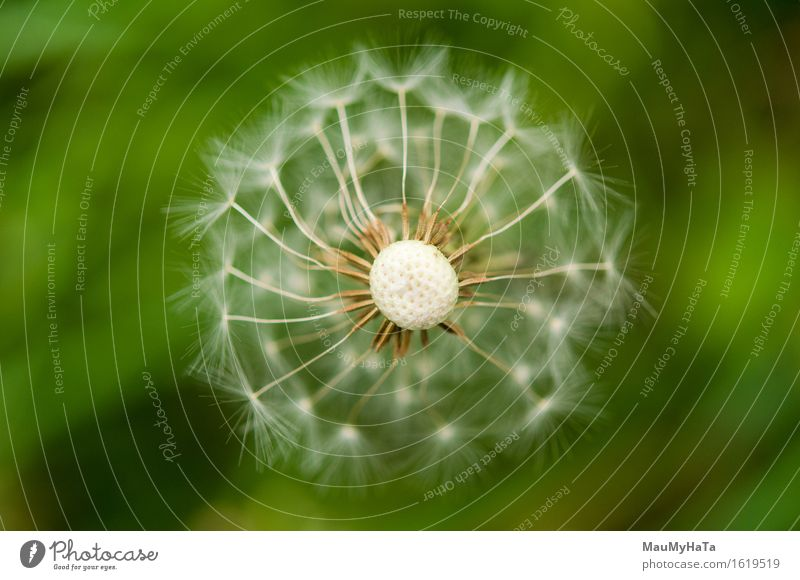 Dandelion Nature Plant Summer Flower Grass Blossom Garden Park Field Forest Advancement Freedom Emotions Perspective Time Colour photo Multicoloured Close-up