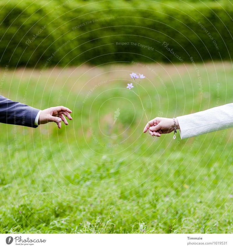 Hand Flower Love Emotions Meadow Happy Garden Elegant Romance Bouquet Infatuation