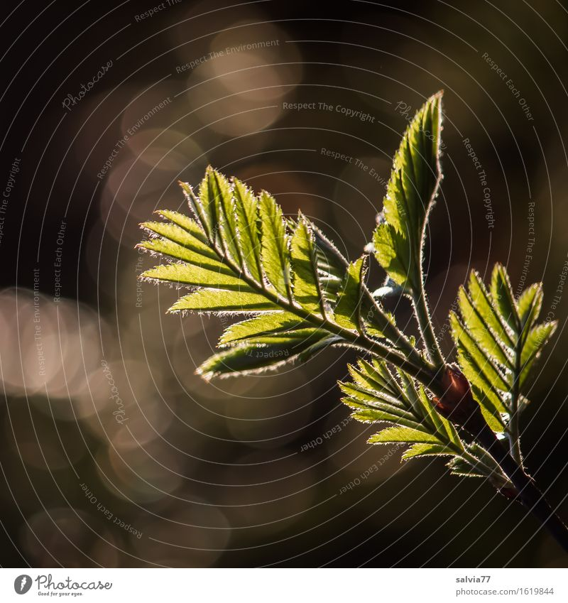 Feathered Nature Plant Spring Tree Bushes Leaf Twigs and branches Forest Esthetic Bright Brown Green Silver Hope Belief Beginning Idyll Symmetry Growth