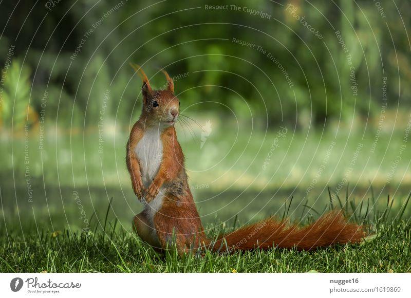 Beautiful Green Calm Animal Natural Orange Contentment Wild animal Esthetic Stand Observe Cute Friendliness Curiosity Peace Pelt