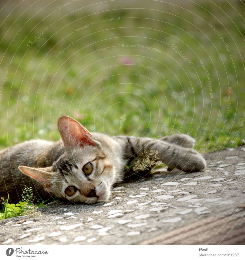Animal Meadow Grass Sadness Cat Contentment Fatigue Boredom Cozy Mammal Feeble Comfortable Exhaustion Indifferent Lethargic