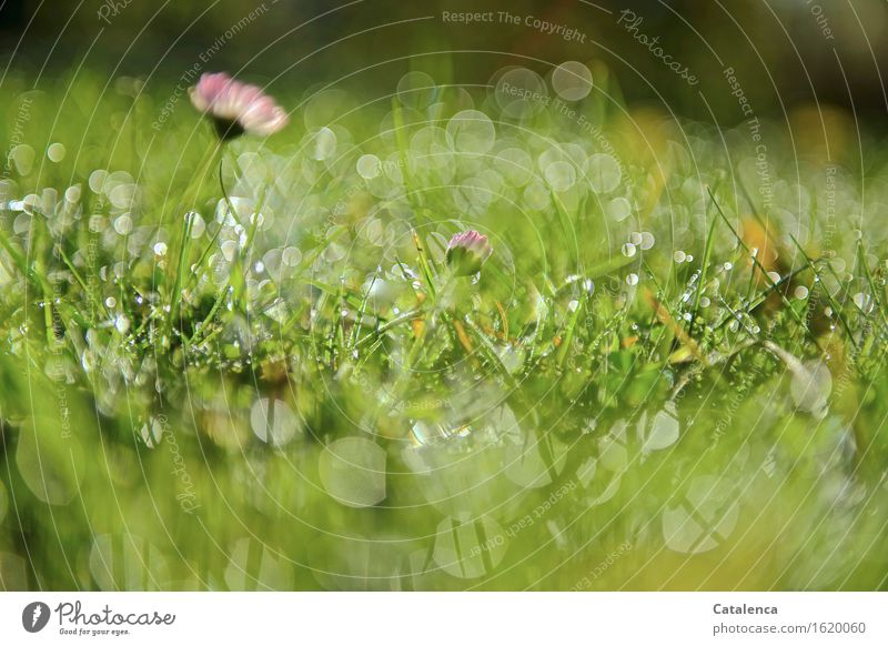 Glitter in the grass Nature Plant Drops of water Sun Beautiful weather Flower Grass Daisy Garden Meadow Movement Fragrance Glittering Faded Growth Esthetic