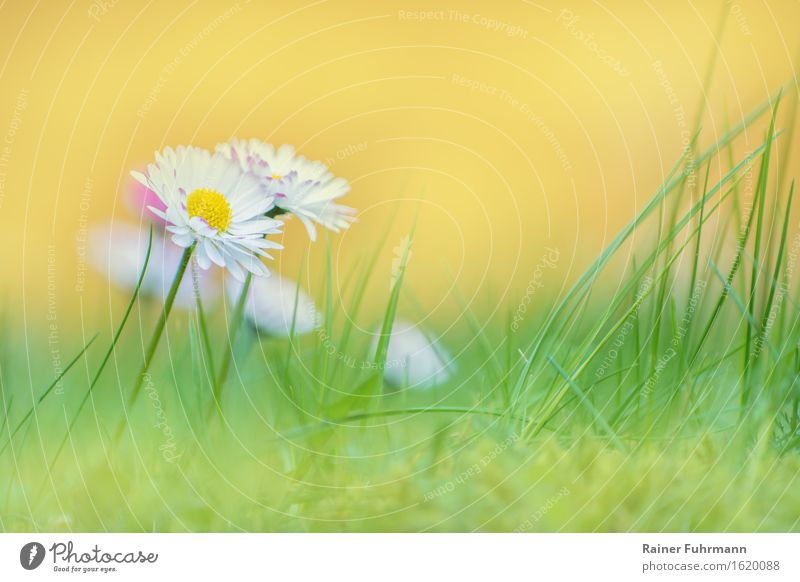 Nature Plant Flower Environment Spring Meadow Daisy