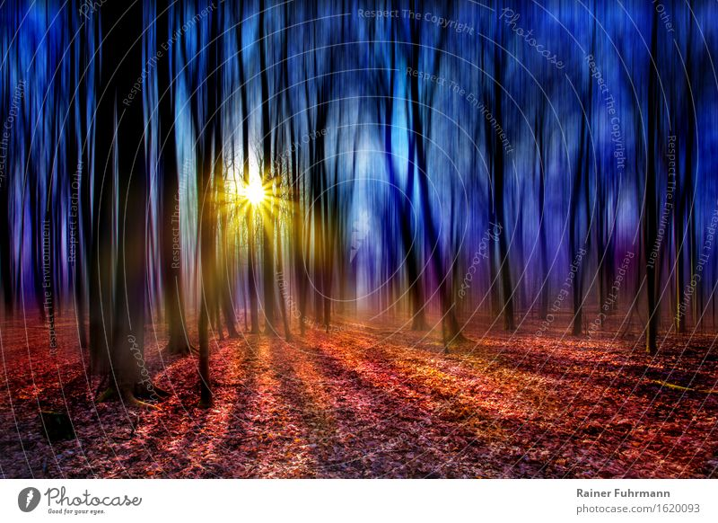 "a fairytale forest against the light Environment Sun Sunlight Spring Beautiful weather Forest Dream Bright Crazy Romance ""Shadows Back-light Dazzle Lonely Magic"