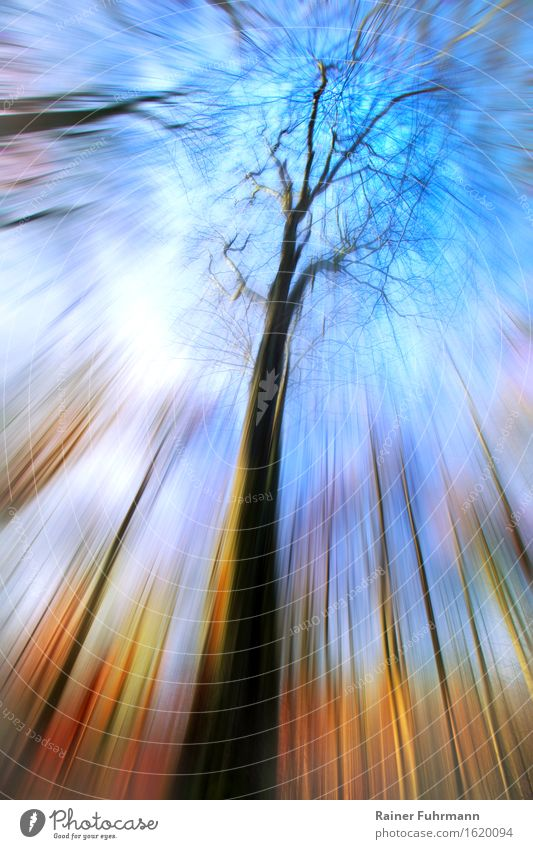 """a psychedelic look to the sky Environment Nature Landscape Plant Air Sky Beautiful weather Park Forest Spring fever Euphoria Dream """"psychedelic Intoxication"""