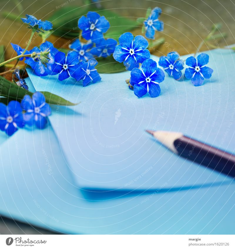 Don't forget mine! Blue note with pen framed by forget-me-not - flowers Office work Workplace To talk Flower Leaf Blossom Write Sympathy Friendship Love