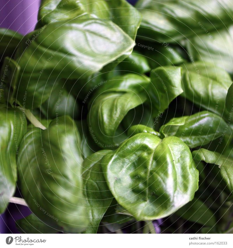 Nature Green Plant Flower Colour Meadow Kitchen Violet Vegetable Herbs and spices Botany Foliage plant Basil Italien pesto