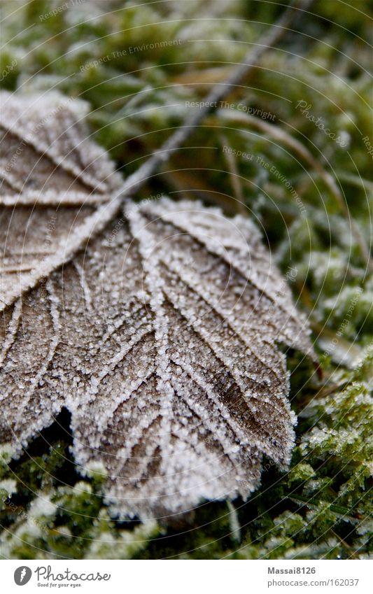 silent Winter Frost Leaf Moss Green Autumn Blur ossified
