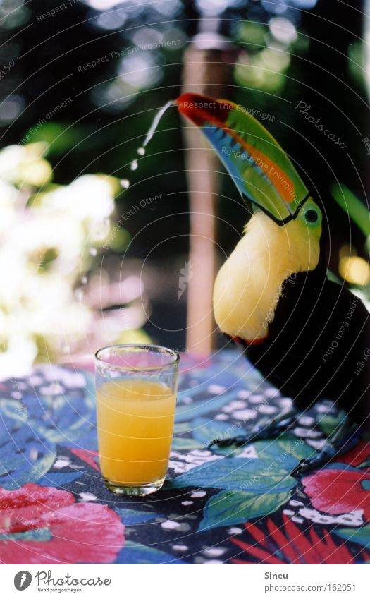 High C Colour photo Multicoloured Close-up Light Shadow Shallow depth of field Animal portrait Fruit Drinking Juice Glass Healthy Summer Beautiful weather