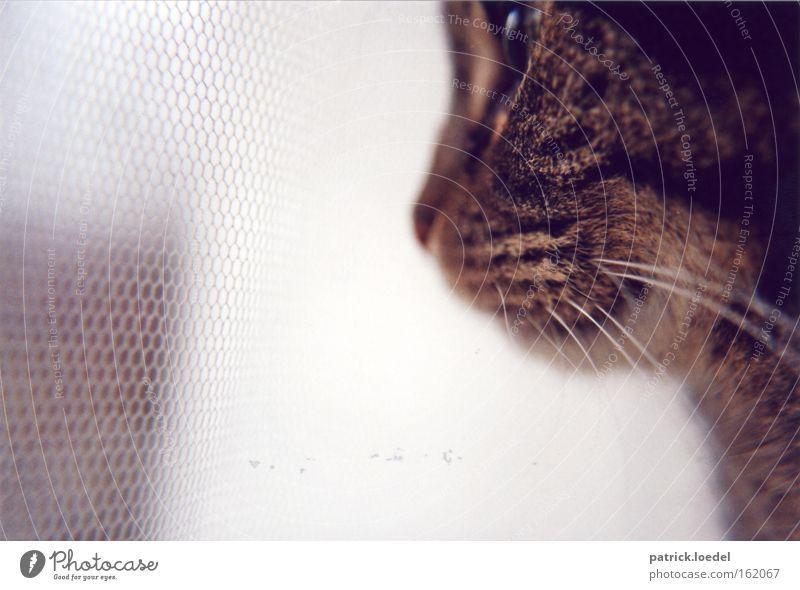 Animal Window Cat Wait Flat (apartment) Elegant Sit Hope Safety Network Vantage point Animal face Net Observe Pelt Zoo