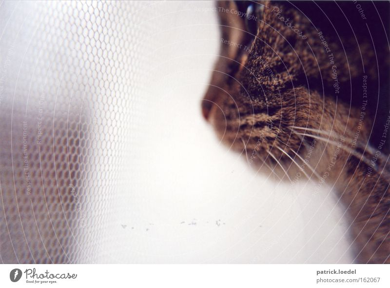 Animal Window Cat Wait Flat (apartment) Elegant Sit Hope Safety Network Vantage point Animal face Observe Pelt Zoo