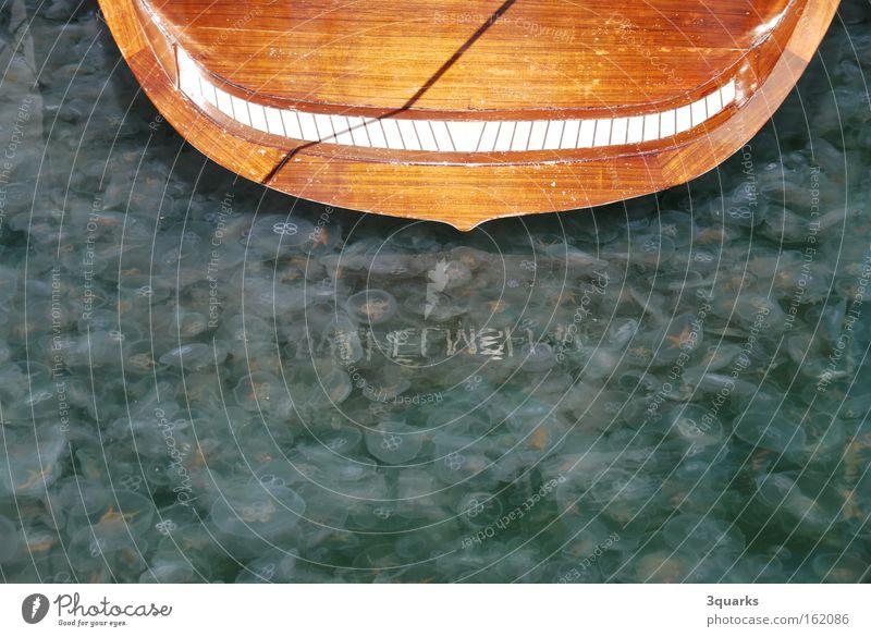 jelly Jellyfish Watercraft Plagues Lake Baltic Sea Sailing Sailboat Stern Green glibber plague with jellyfish