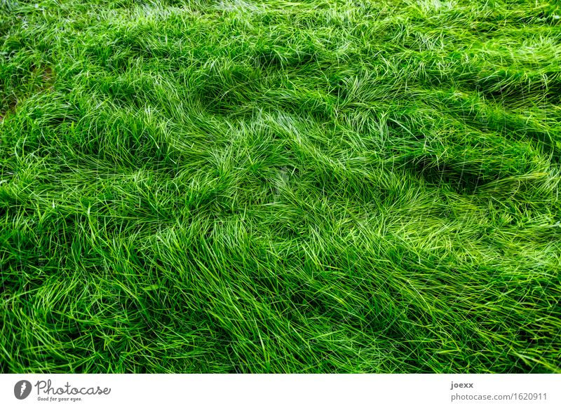 cuddly grass Garden Meadow Growth Soft Green Movement Nature Colour photo Exterior shot Deserted Contrast