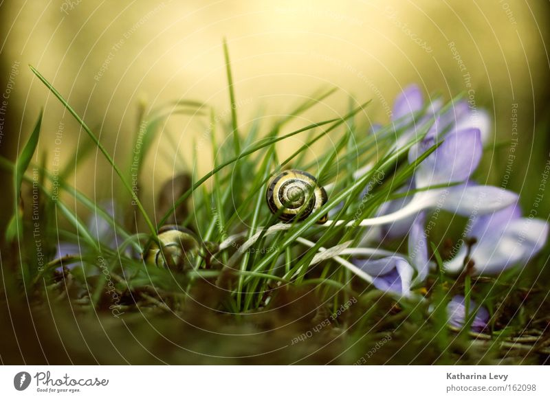 Nature Flower Plant Animal Blossom Grass Spring Earth Lawn Floor covering Passion Brave Snail Caution Endurance Diligent