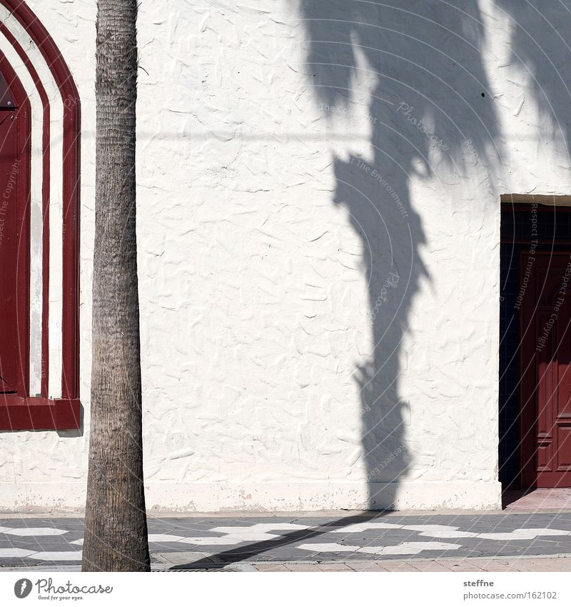 Under palm trees Palm tree Shadow Wall (building) Red White Sun Door Plaster Hot Vacation & Travel Spain Spanish Florida Tampa USA Detail Summer ybor