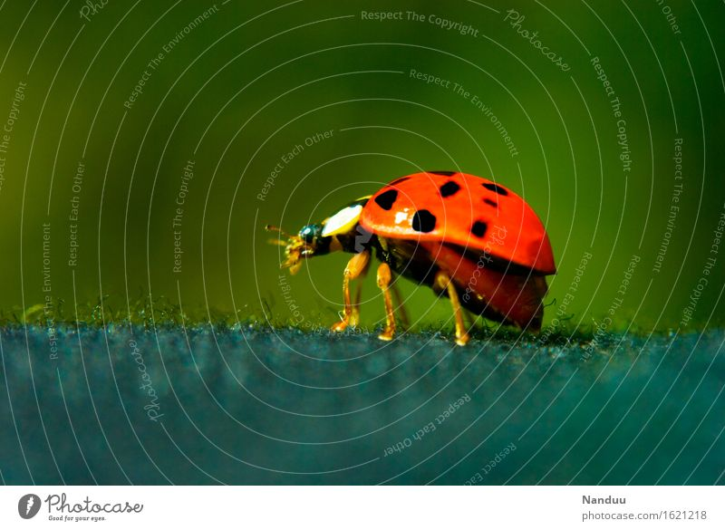 Ready to go Wild animal Beetle Ladybird Domestic Cute 1 Animal Good luck charm Red Popular belief Departure Nature Summer Spring Colour photo Multicoloured