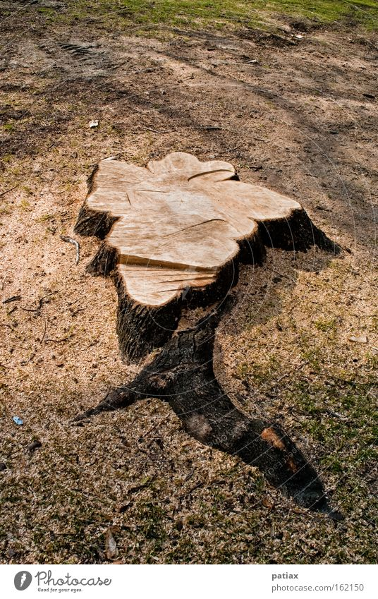city tree Tree trunk Tree stump Burl wood Log Annual ring Woodground Clearing Austria Vienna Remainder Nature tree felling Tree stump Rootstock sawdust dumb