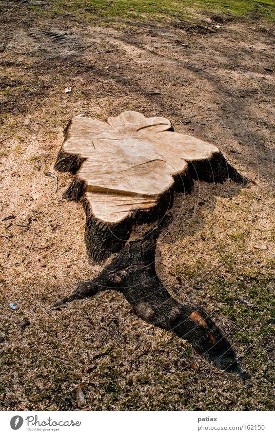Nature Tree Tree trunk Austria Vienna Remainder Woodground Clearing Tree stump Annual ring Log Burl wood