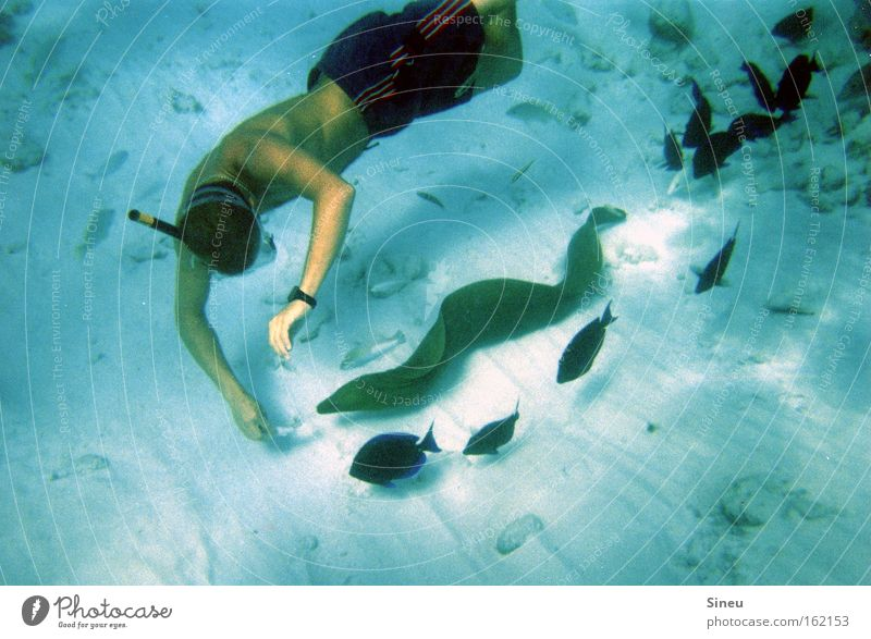 decoy Colour photo Underwater photo Upper body Diver Ocean Aquatics Human being Masculine 1 Sand Water Swimming trunks Animal Wild animal Fish Flock Breathe