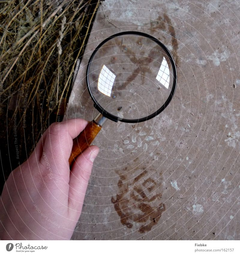 Hand Floor covering Ground Search Curiosity Tracks Mysterious Location Police Officer Footprint Discover Clue Magnifying glass Criminality Murder