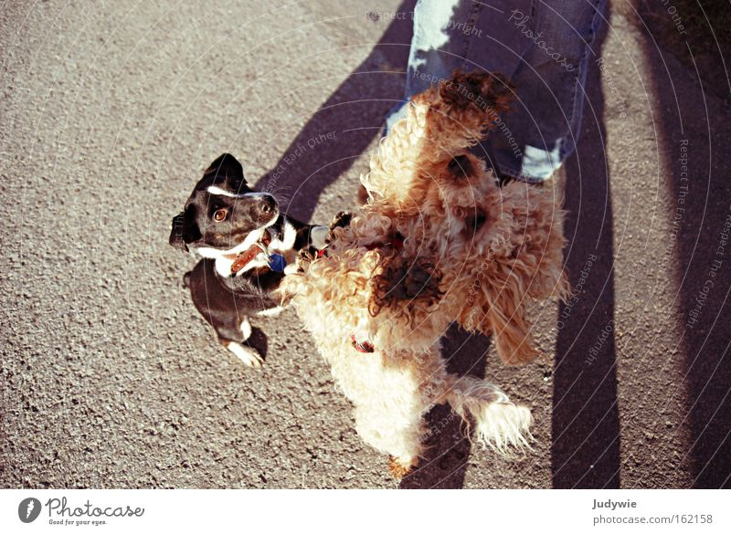 I want the treat! Colour photo Exterior shot Day Playing Sporting event Friendship Animal Dog Fight Competition Beg Require Mammal reward