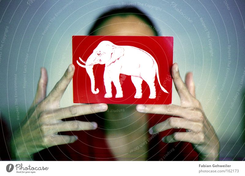 Hand Old White Red Asia Card Elephant Thailand Ensign