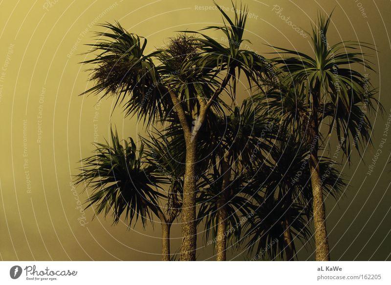 Isle of Ireland Palm tree Sunset Twilight Tree Island Sunlight Wind Beautiful weather Vacation & Travel Coast Shannon clare