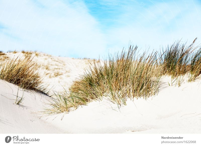 dune grass Vacation & Travel Summer Summer vacation Sun Beach Ocean Nature Landscape Sand Sky Clouds Beautiful weather Plant Grass North Sea Baltic Sea