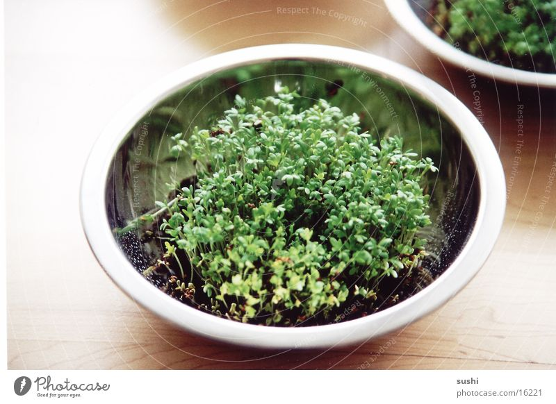 Bowl Pot Herbs and spices Edible Cress