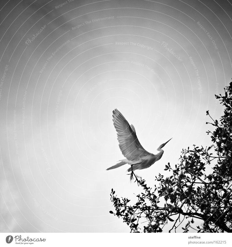 White Tree Black Air Bird Flying Large Aviation Airplane landing Majestic Heron Great egret