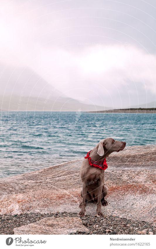 Dog Nature Water Ocean Landscape Animal Joy Mountain Natural Coast Freedom Rock Rain Leisure and hobbies Air Hiking