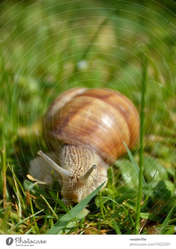 Look me in the eye Life Senses Environment Nature Plant Animal Summer Grass Meadow Snail 1 Hiking Glittering Curiosity Slimy Brown Green Spring fever Caution
