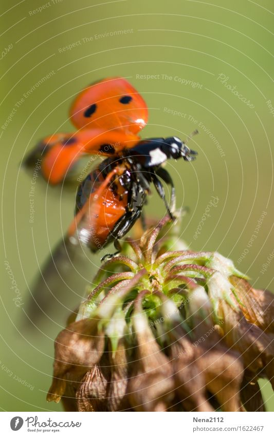 Tchüß Environment Nature Plant Animal Air Beautiful weather Blossom Garden Park Meadow Field Beetle Animal face Wing 1 Red Insect Ladybird Flying Departure