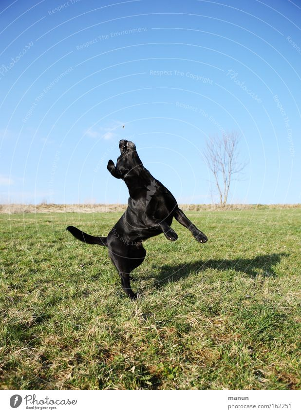 Easy exercise Dog Animal training Professional training Practice Playing Pet Movement Fitness Healthy Obedient Jump Hop Joy Athletic Education Concentrate