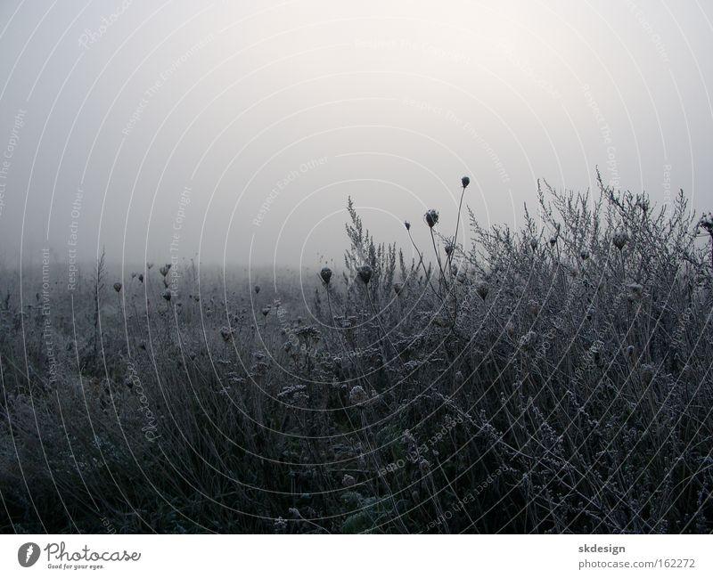 Winter Meadow Gray Fog Frost Hoar frost Bad weather Morning fog Apiaceae Trieste Fallow land