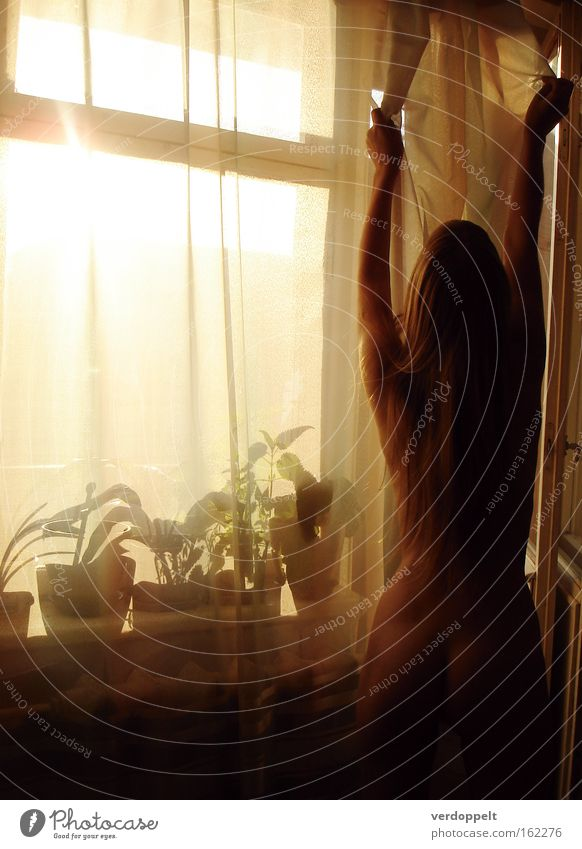 0_13 Woman Flower Yellow Nude photography Naked Window Living or residing Curtain Flowerpot Silhouette Human being Shadow