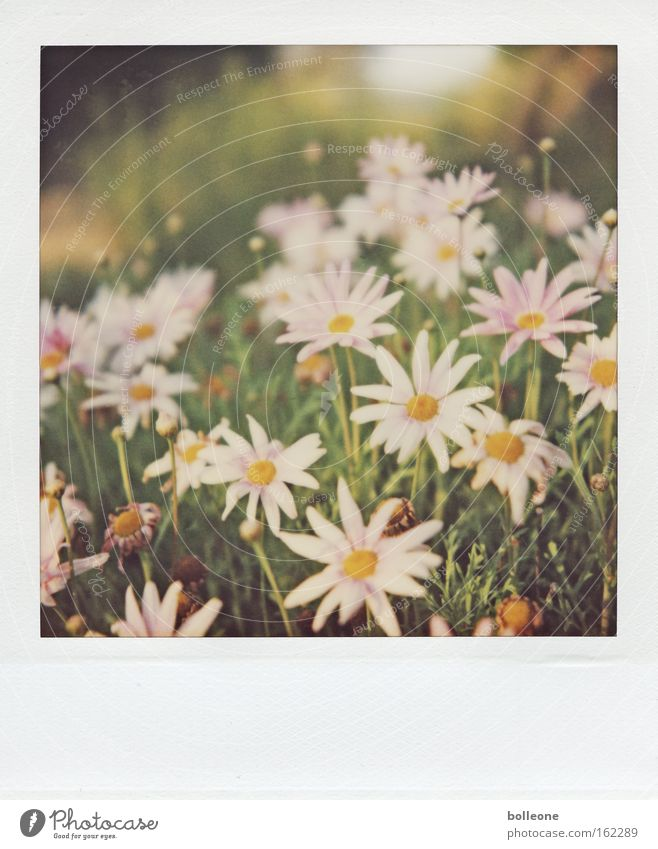 Spring can come... Flower Meadow Vacation & Travel South Africa Green Blossoming Life Polaroid Memory Plant