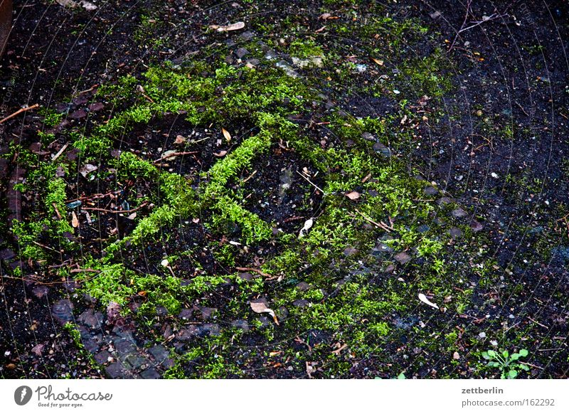 gulli Gully Drainage system Effluent Cast iron Moss Old Ground Industrialization Zone Crucifix Green Select Elections Detail Derelict Transience mossy tick