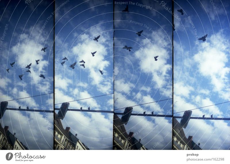 Kalle Marx gave him his pigeons Pigeon Town Sky Clouds Flying Traffic light Lomography Idyll Bird Flock House (Residential Structure) Joy