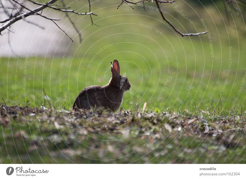 Leaf Relaxation Meadow Nose Free Sit Break Easter Ear Peace Observe Pelt Mammal Hare & Rabbit & Bunny Hop Animal
