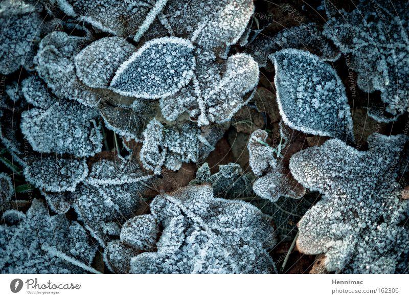 -1°. Cold Winter Ice Frost Leaf Nature Blue Dark Brown Dark brown Freeze Hoar frost Autumn Frozen Sadness Grief Decent Damp Ground Plant Calm Motionless