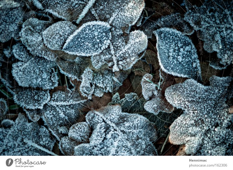 Nature Blue Beautiful Plant Leaf Winter Calm Dark Cold Autumn Sadness Brown Ice Ground Frost Round