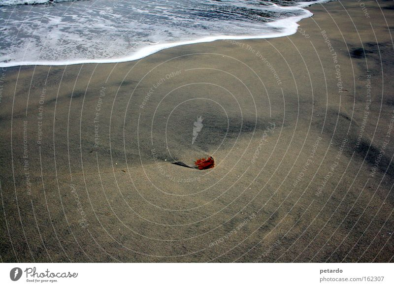 Ocean Red Beach Loneliness Lake Sand Waves Coast Earth Transience Footprint Surf Foam Algae High tide Low tide