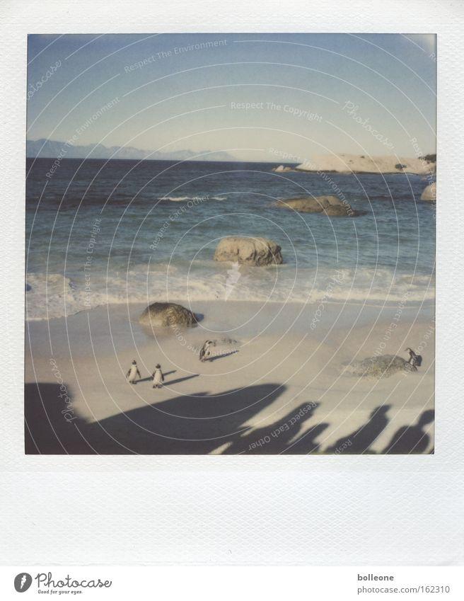 Ocean Blue Summer Beach Vacation & Travel Animal Bird Waves Penguin South Africa Africa