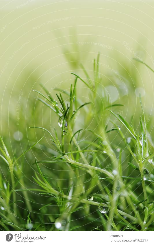 Water Green Grass Spring Dream Glittering Drops of water Wet Fresh Delicate Concentrate Damp Glimmer