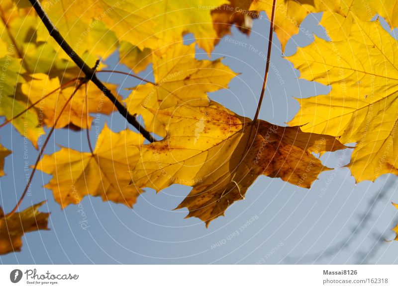 autumn lights Autumn Yellow Multicoloured Blue Leaf Complementary colour Seasons