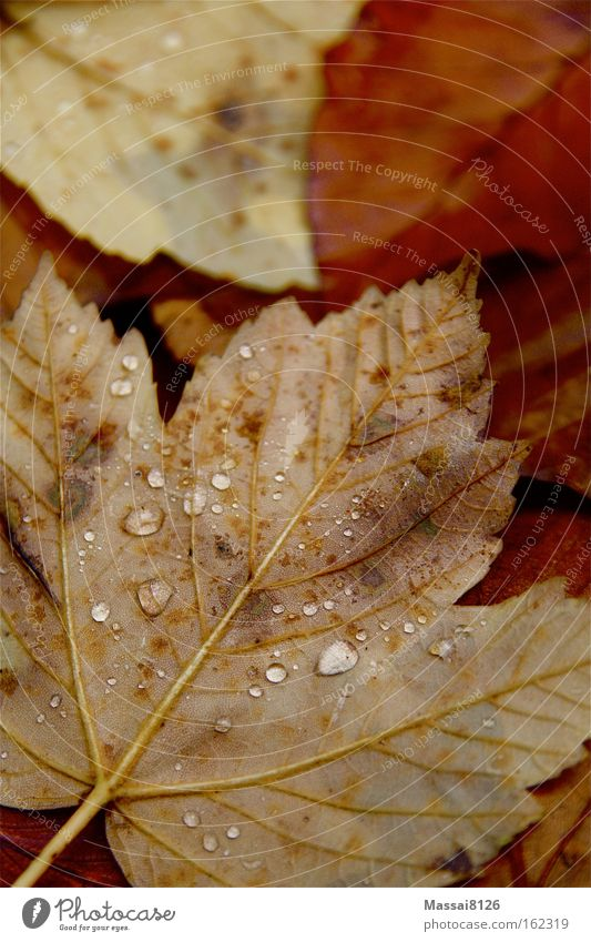 autumn thunderstorm Autumn Red Orange Drops of water Water Ground Leaf Rain