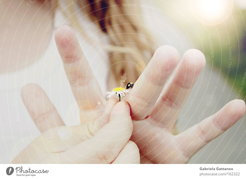let the sunshine in Hand Crush Smooth Beetle Daisy Girl Wind Sunbeam Delicate Encounter Summer Caution